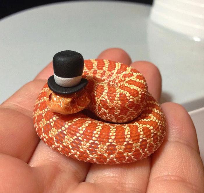 Si-te-dan-miedo-las-serpientes-ponles-un-gorrito-01