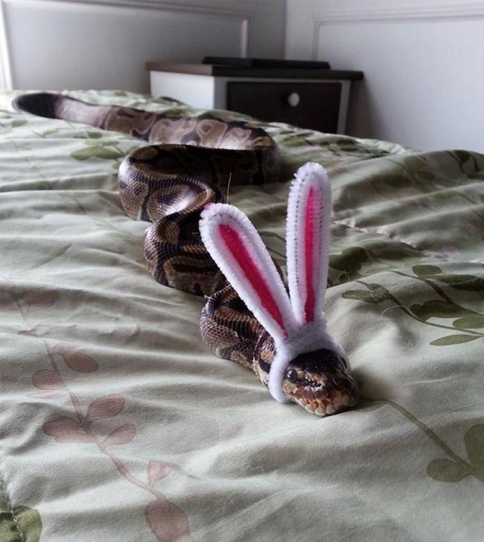 Si-te-dan-miedo-las-serpientes-ponles-un-gorrito-03-696x779