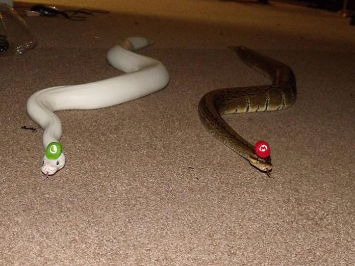Si-te-dan-miedo-las-serpientes-ponles-un-gorrito-09-696x522