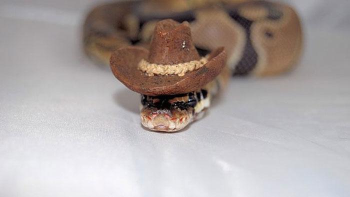 Si-te-dan-miedo-las-serpientes-ponles-un-gorrito-10