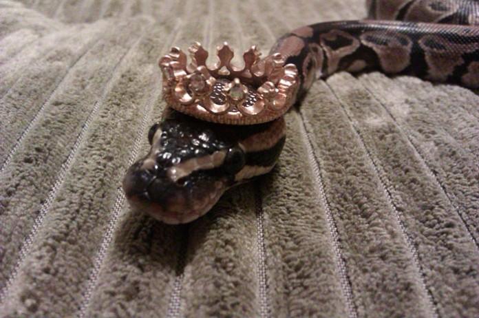 Si-te-dan-miedo-las-serpientes-ponles-un-gorrito-11-696x462