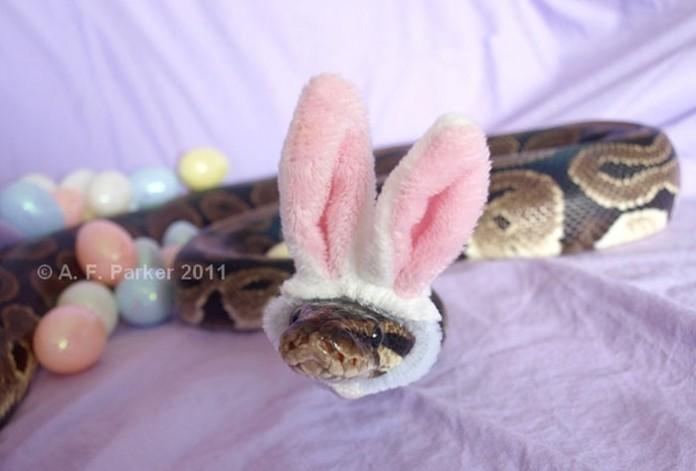 Si-te-dan-miedo-las-serpientes-ponles-un-gorrito-14-696x471