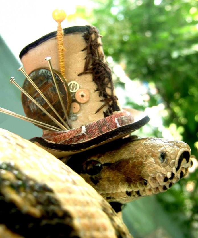 Si-te-dan-miedo-las-serpientes-ponles-un-gorrito-17-696x836