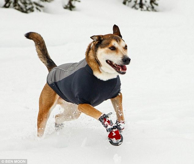 denali-El-homenaje-a-un-perro-de-su-amado-dueno-en-su-batalla-contra-el-cancer-02