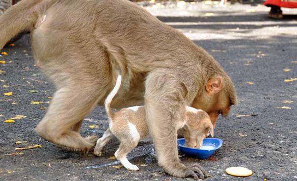 mono-adopta-cachorrito-erode-india-03 (2)