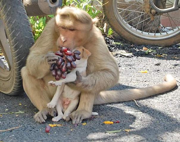 mono-adopta-cachorrito-erode-india-07 (1)