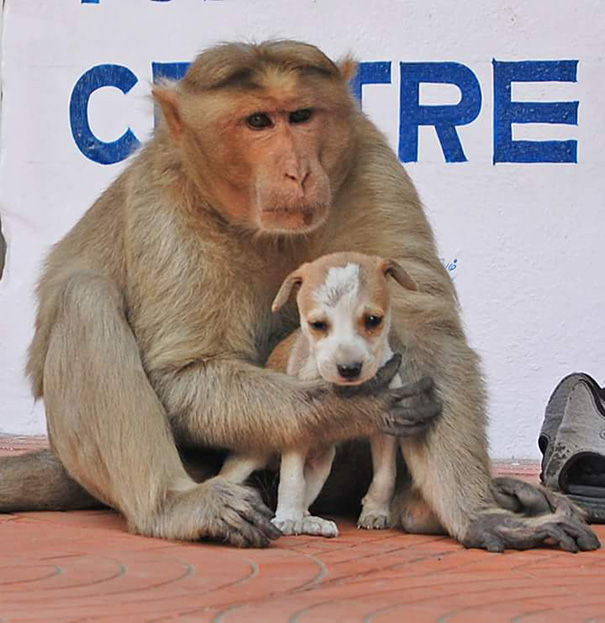 mono-adopta-cachorrito-erode-india-09 (1)