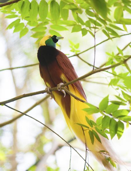 450-185897839-bird-of-paradise