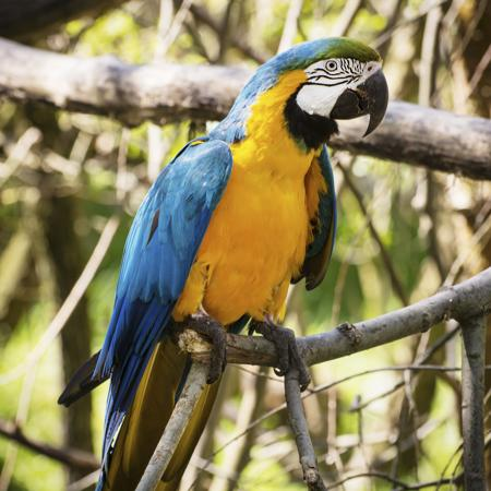 450-494117627-blue-yellow-macaw
