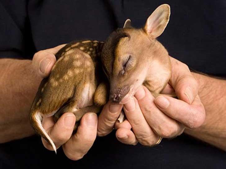 Baby-Animals8
