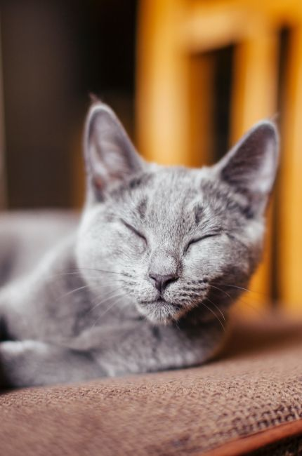 ver-videos-de-gatos-bueno-para-la-salud-mental-corbis