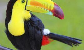 14 aves más coloridas del mundo