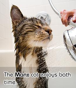 ¿ Porque los gatos odian tanto el agua?