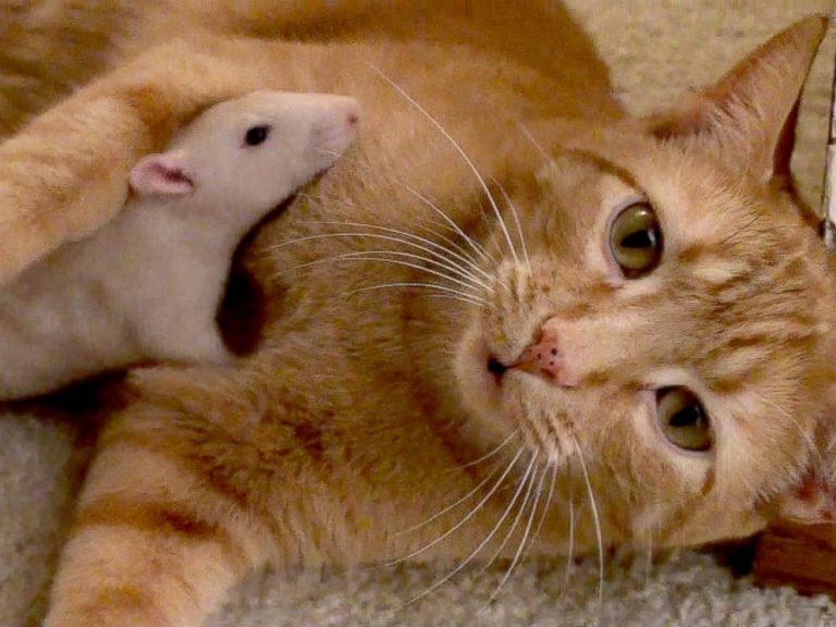 Cuando veais lo que este gato va a abrazar os derritirá