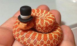 ¿Te asustan las serpientes?…¡Ponles un  gorro!