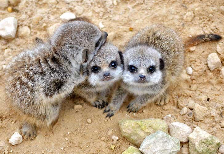 16 Animales que jamás imaginaste en su versión mas tierna de bebés