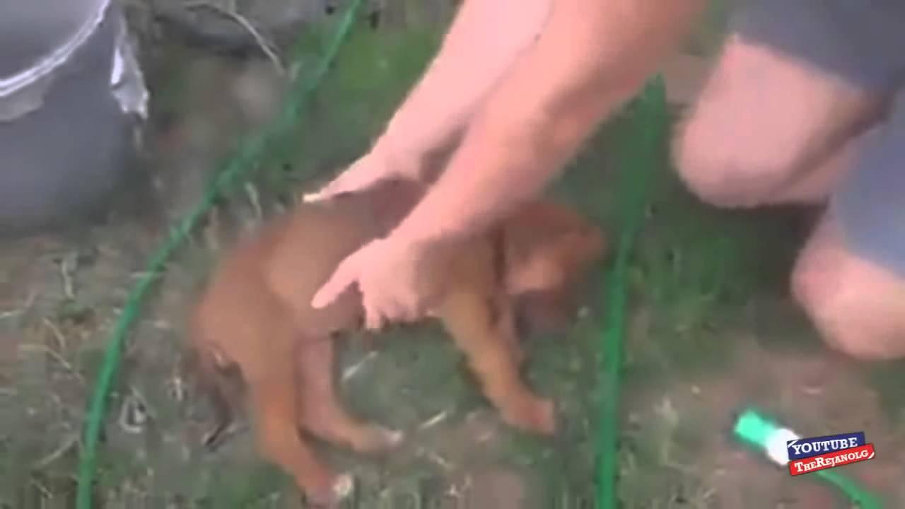 Cachorrito se hace el muerto para no ser bañado