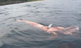 Pescadores rusos lograran capturar accidentalmente a un calamar gigante