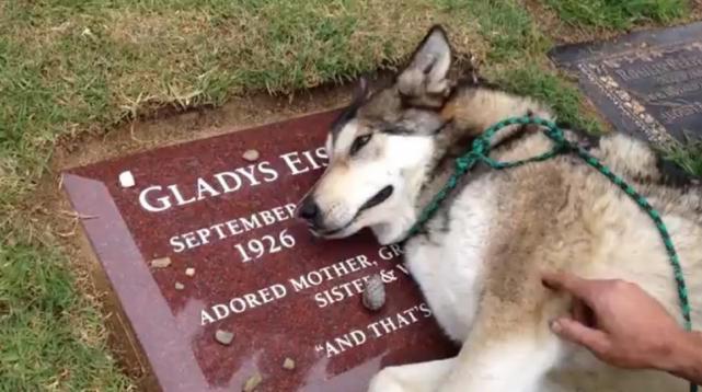 perro llora desconsoladamente en la tumba de su dueña