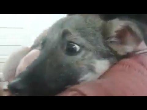 Asi vive un perro aterrorizado por las caricias humanas